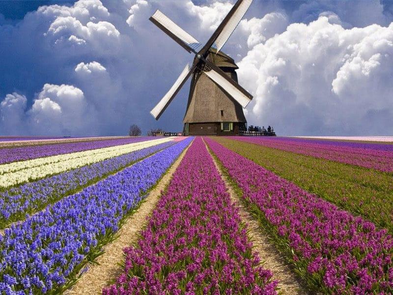 Hollanda'da Mutlaka Tatmanız Gereken 7 Lezzet