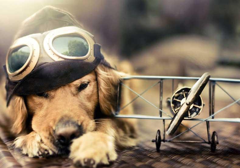 Evcil Hayvan ile Uçak Yolculuğu