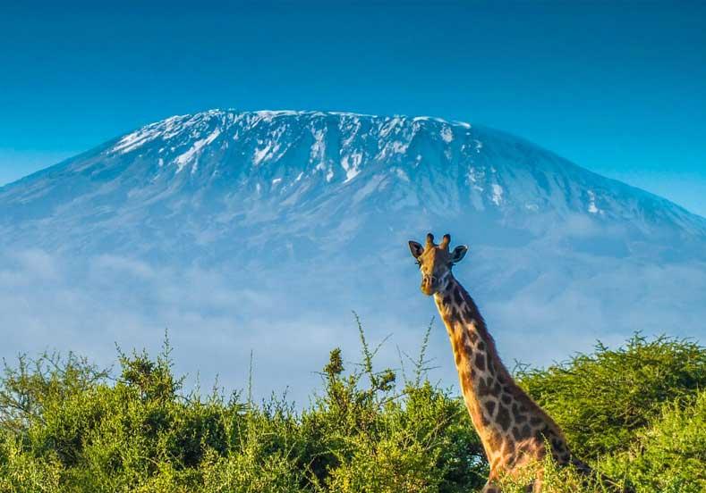 Kilimanjaro Gezi Rehberi
